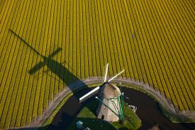The wind mill of the Keukenhof at the edge of a tulip field in Lisse,The Netherlands.