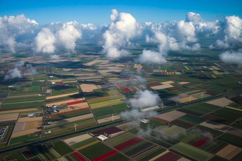 Fields of blossoming tulips in Den Helder, northern Netherlands.