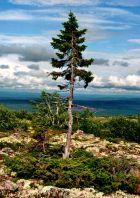 albero01