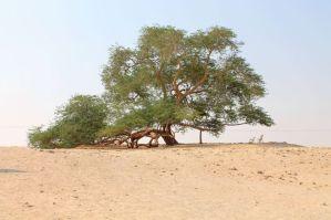 albero02