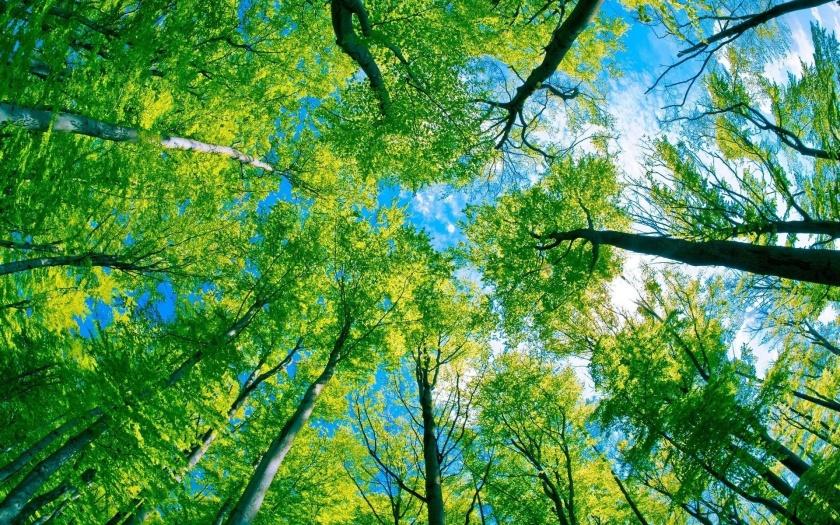 alberi01.jpg