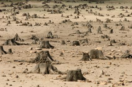 deforestazione_2.jpg