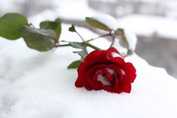 rose-inverno_NG3-d3bbe.jpg