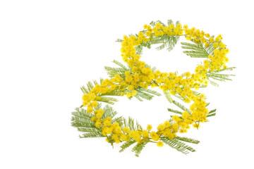 mimosaa