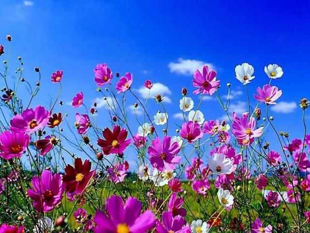 primavera (1).jpg