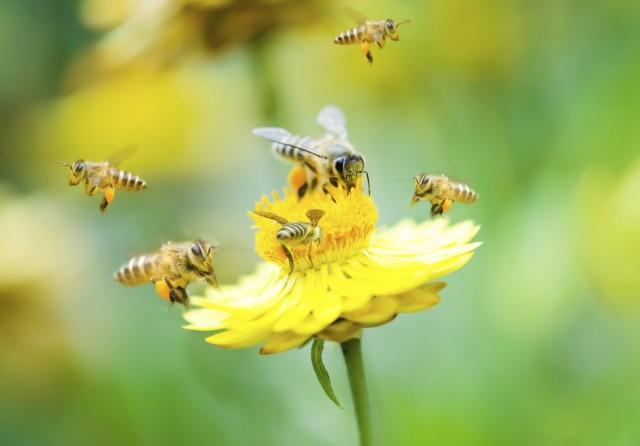 come-salvare-api-impegno-barack-obama-economia-agricola-stati-uniti-2-640x446