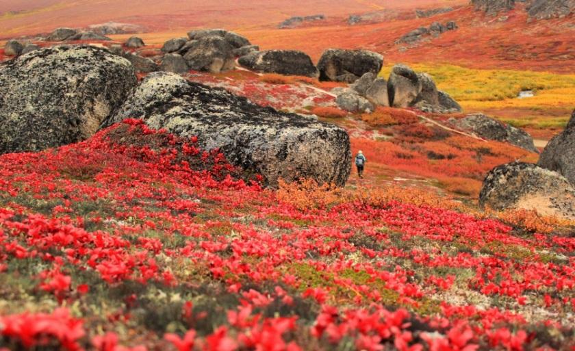 autunnoalaska.900x600.jpg