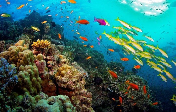 Oceani-Barriera-Corallina.jpg