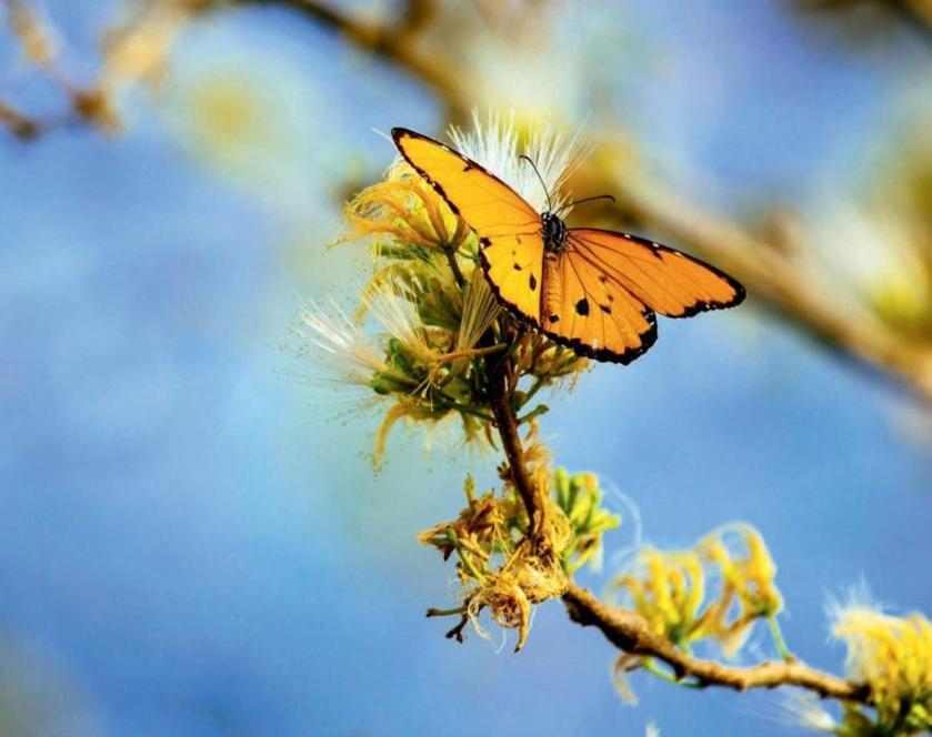 farfalla0a.JPG