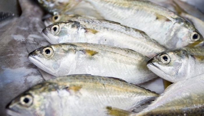 pesci.jpg