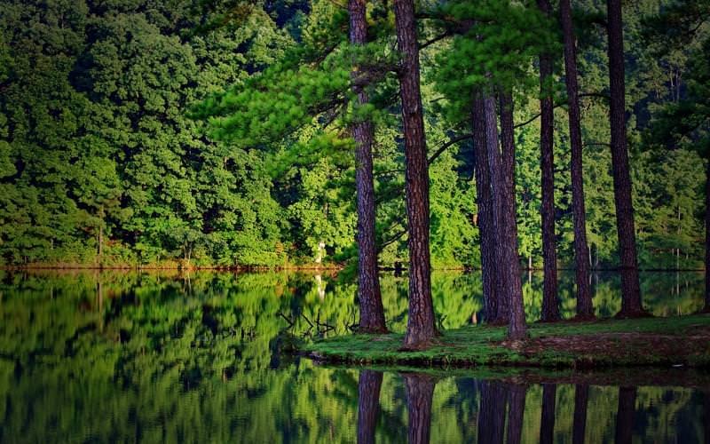 forestaa.jpg