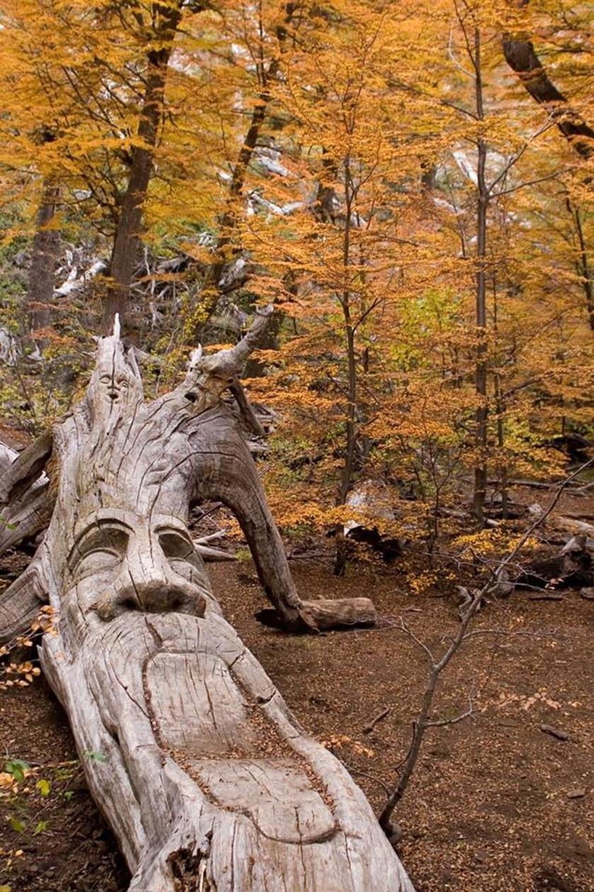 foresta01.jpg