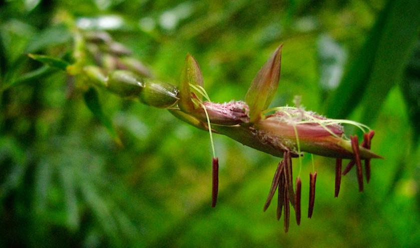 bambu01.png