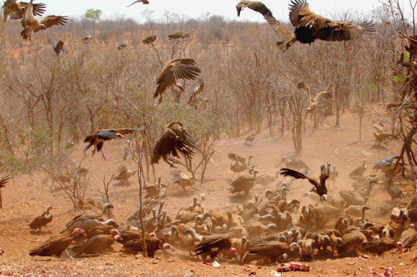 avvoltoi.jpg
