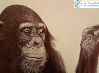 cervello-umano-si-è-discostato-da-quello-delle-grandi-scimmie-320x234.jpg