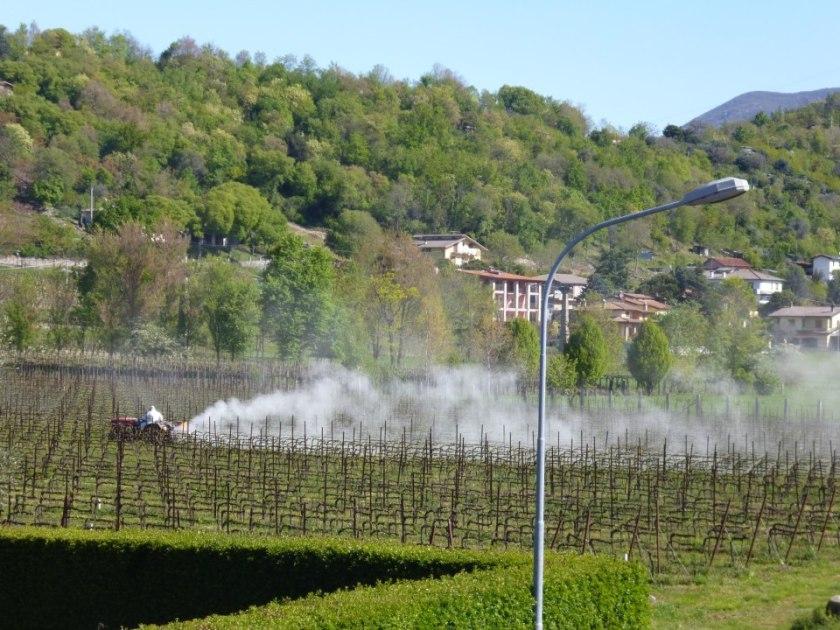 prosecco-pesticidi-vigneti-2.jpg